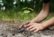 Δενδροφύτευση στον Βύρωνα προς αντικατάσταση του πρασίνου που κάηκε στην πυρκαγιά του 2016