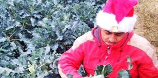 Κιλκίς: Αγρότης καλλιεργεί τα λαχανικά του υπό τους ήχους χριστουγεννιάτικης μουσικής