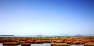 Η Λιμνοθάλασσα Νεοχωρίου ζωντανεύει και μπορούν να την απολαύσουν όλοι!