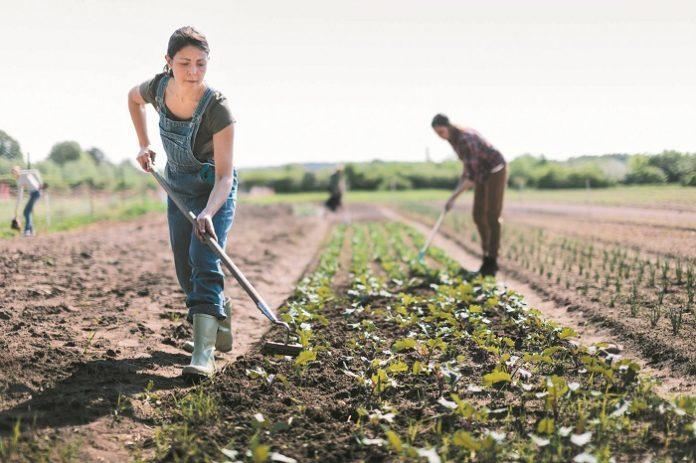 Γυναίκες επικεφαλής εκμεταλλεύσεων και ψηφιακή γεωργία στις προβλέψεις για το 2021