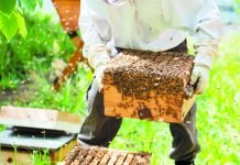 Στη σωστή διαχείμαση των μελισσιών ποντάρουν οι μελισσοκόμοι