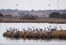 Δημοσιεύθηκε η Ετήσια Έκθεση του Φορέα Διαχείρισης Εθνικού Πάρκου ΑΜΘ