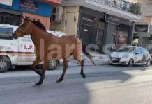 Λάρισα: «Σούζα τ' αλογάκι» – Έκοβε βόλτες στην πόλη μέχρι να το σταματήσουν (βίντεο)